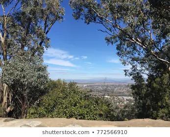 view tamworth