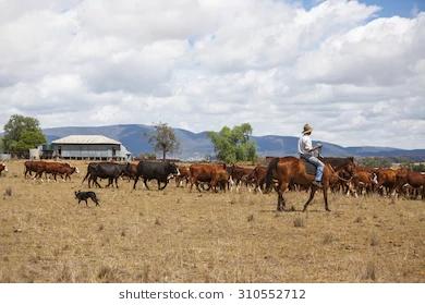 worker horse