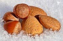 nuts-4021450__340