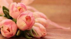 tulips-2068692__340