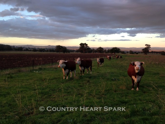 24 Hereford Happiness